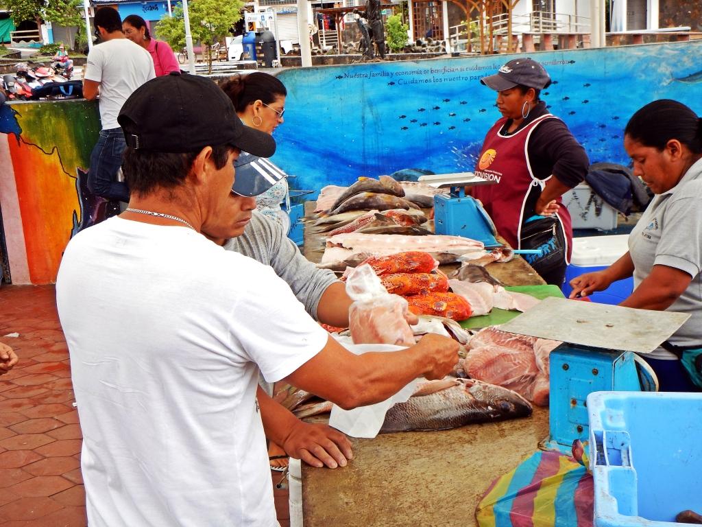 Fish market in Puerto Ayora, Galapagos