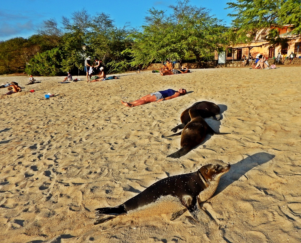 Sea Lions, Puerto Baquerizo Moreno,beach, Galapagos