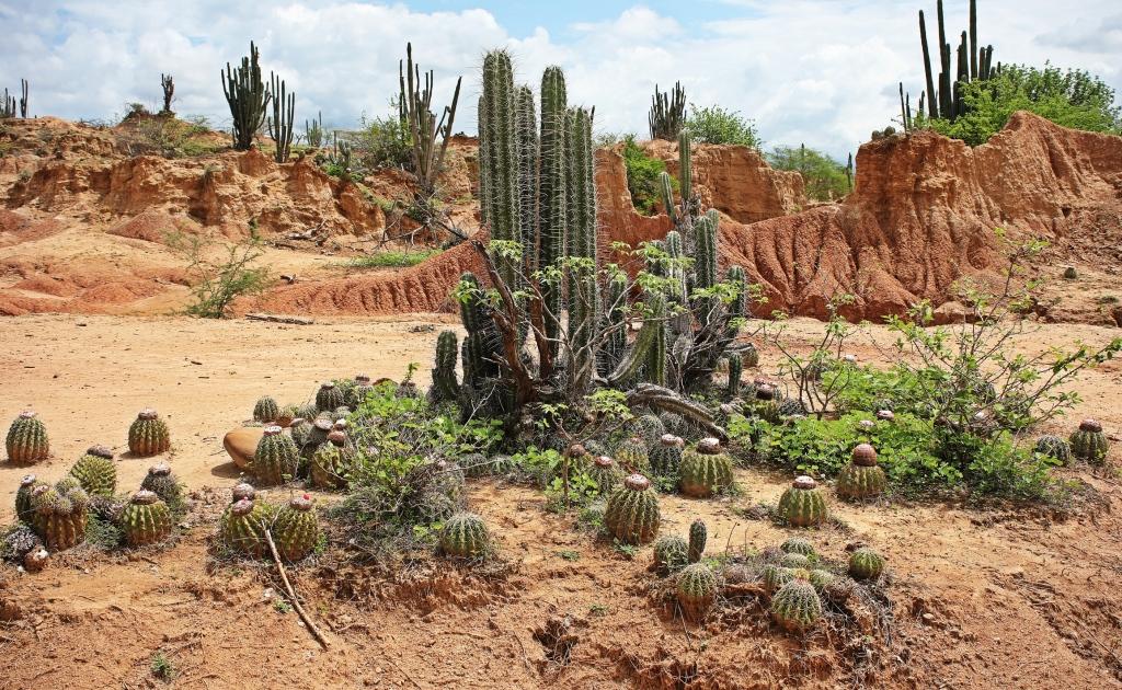 Cacti, Cuzco, Tatacoa Desert