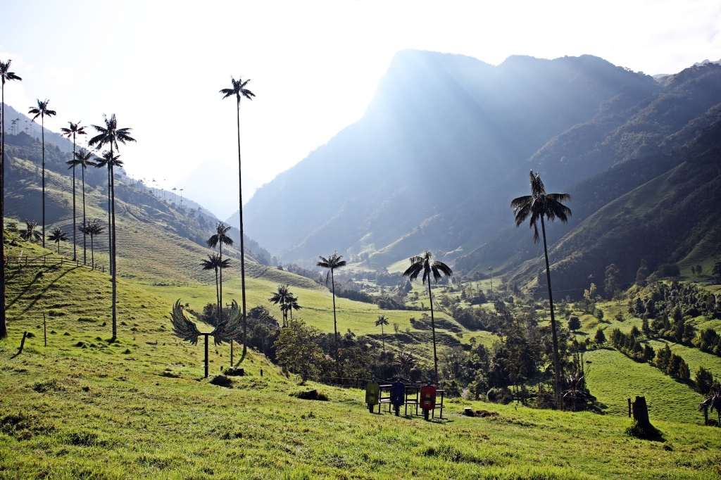 Wax Palms, Valle de Cocora
