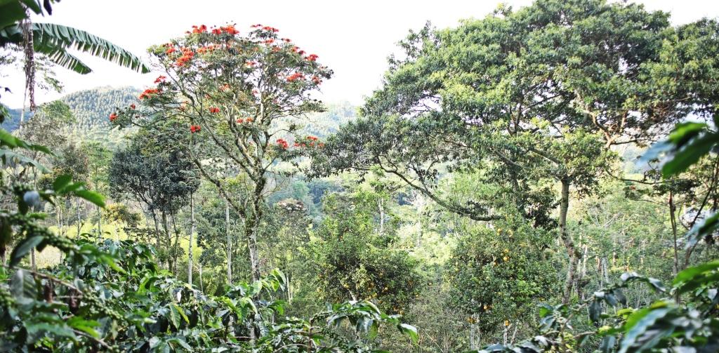 Garden, Finca El Ocaso