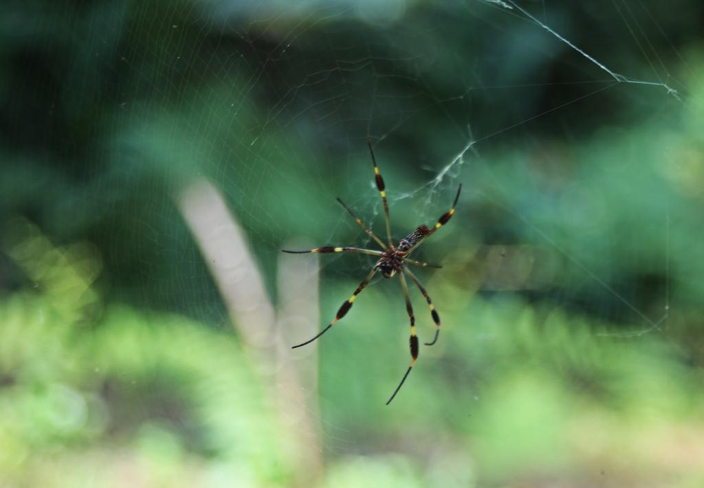Spider, Ciudad Perdida Trek