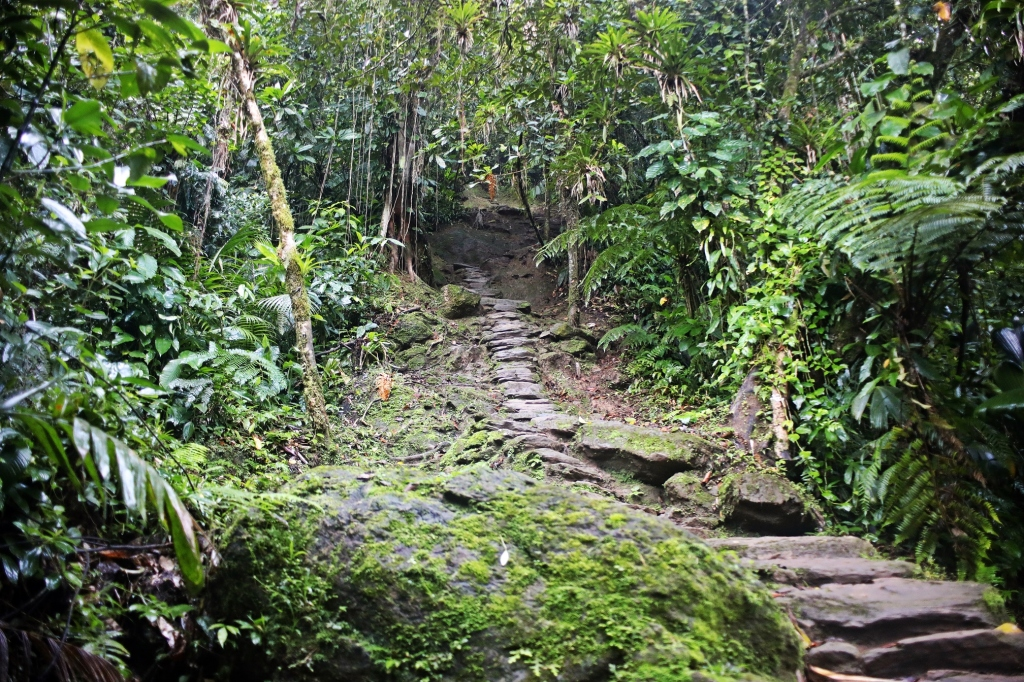 Ancient steps, Cuidad Perdida