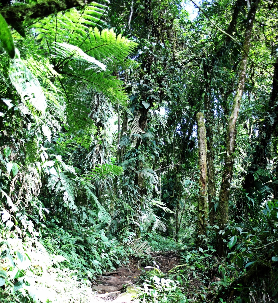 Dense jungle, Lost Waterfalls Trek, Boquete