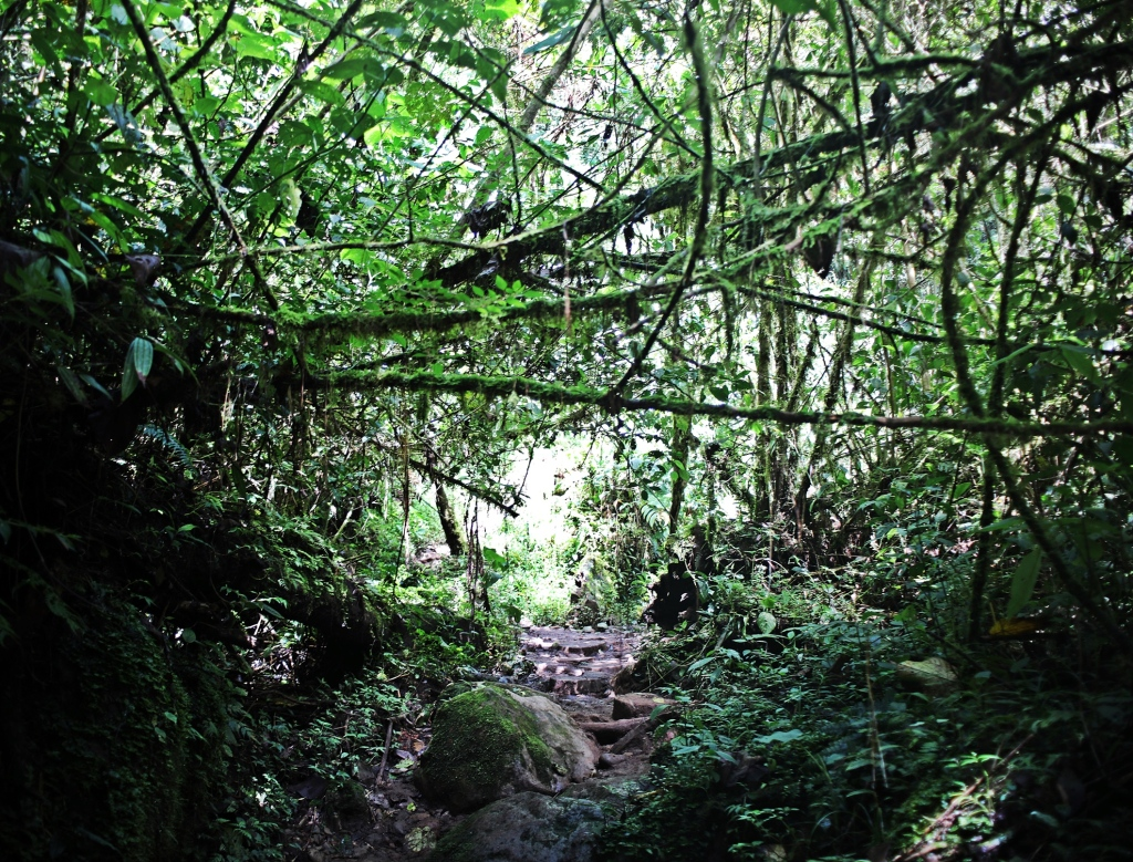 Lost Waterfalls Trek