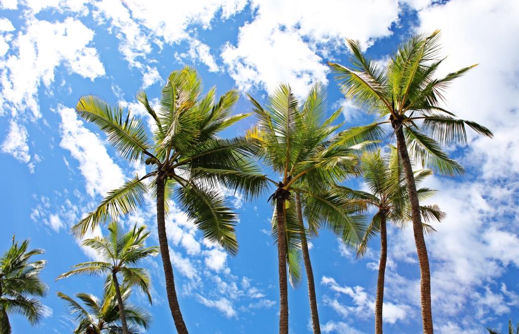 Palms, Ballena National Marine Park