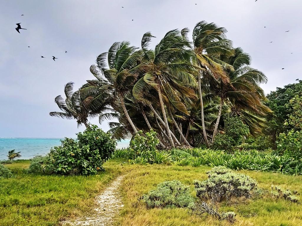 Frigates, Half Moon Caye