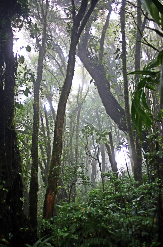 Dense jungle, Santa Elena Cloud Forest Reserve
