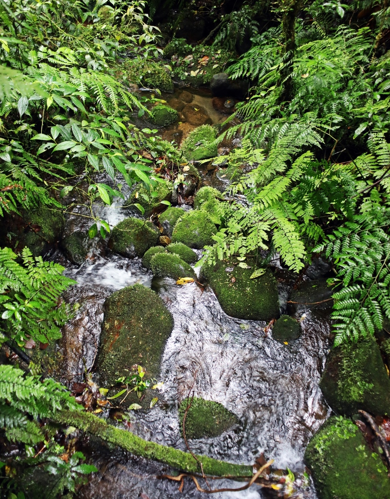 Mossy creek, Santa Elena Cloud Forest Reserve