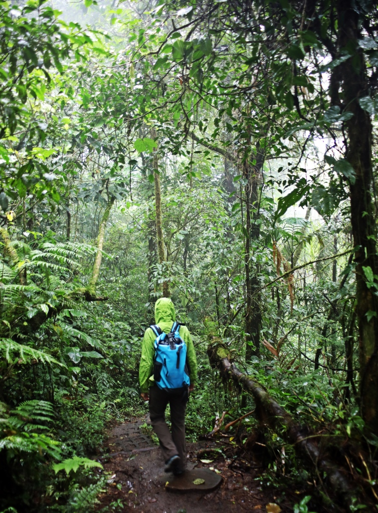 Stepping stone on hiking trail, Santa Elena Cloud Forest Reserve