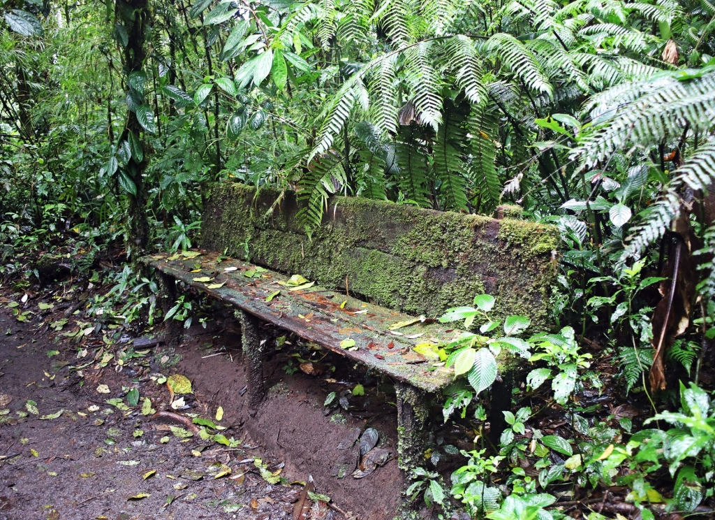Mossy bench, Santa Elena Cloud Forest Reserve