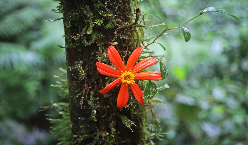 Jungle flower growing on tree bark, Santa Elena Cloud Forest Reserve