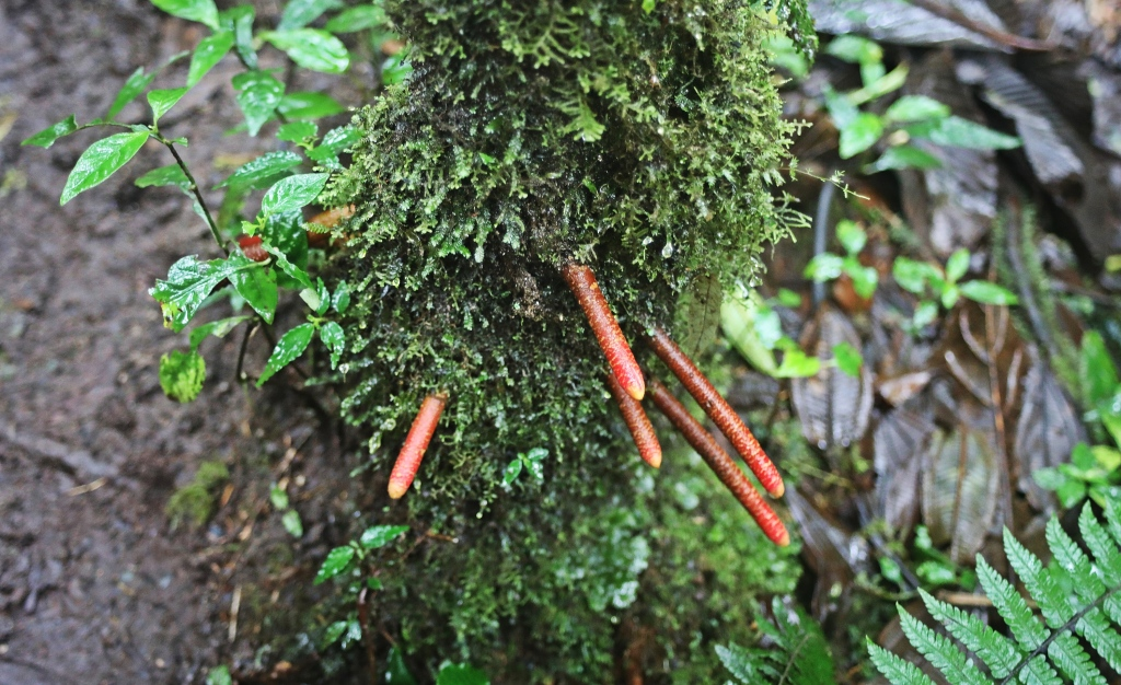 Jungle plant growing on a tree, Santa Elena Cloud Forest Reserve
