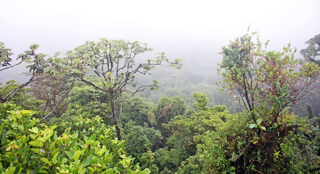 View from lookout, Santa Elena Cloud Forest Reserve