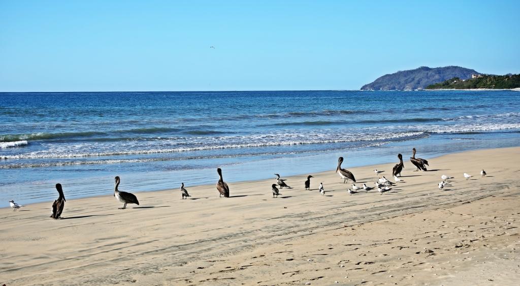 Shore birds, Parque Nacional Marino Las Baulas