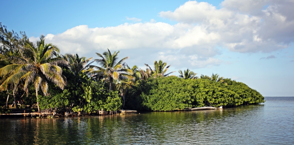 Mangroves on the river, Ambergris Caye