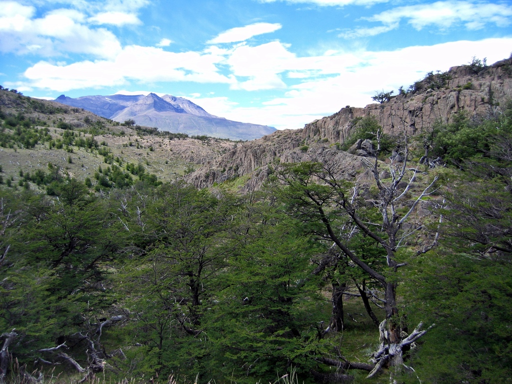 Trek through lenga forest, Parque Nacional Los Glaciares