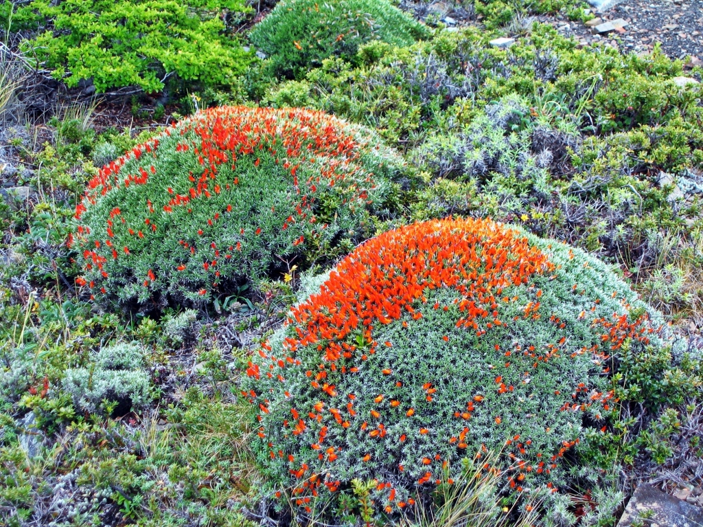 Vegetation, Parque Nacional Torres del Paine