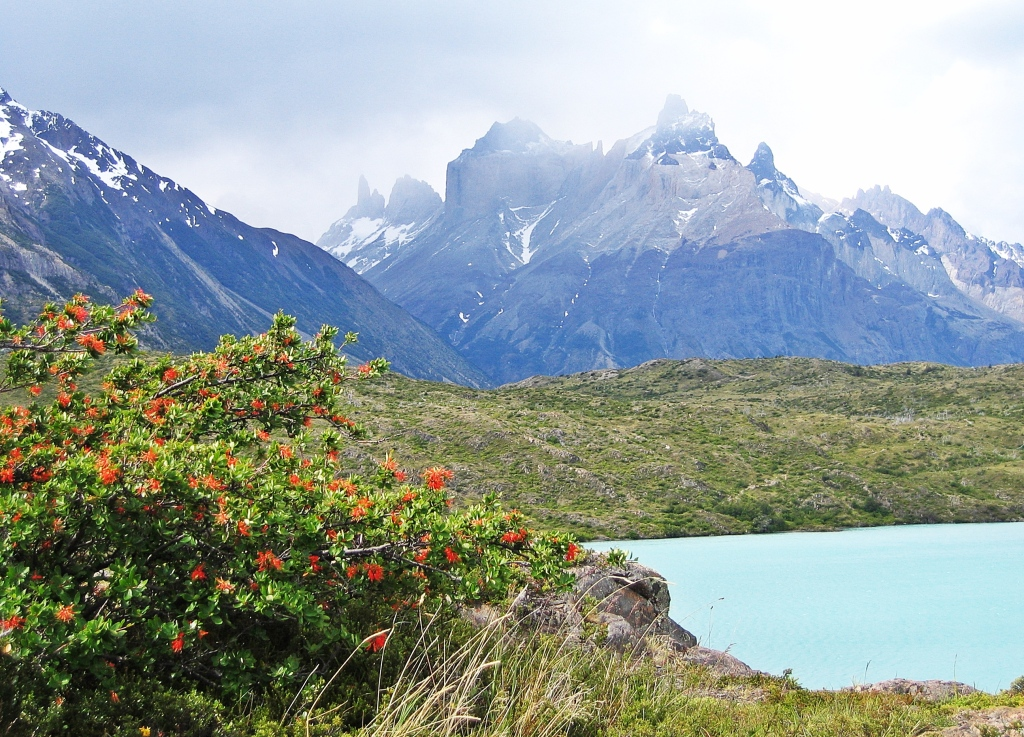 Fire tree and Cuernos del Paine from Lago Pehoe