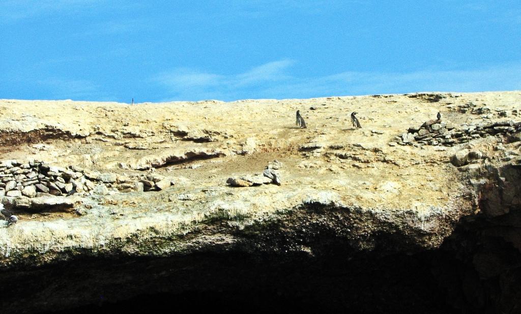 Penguins, Islas Ballestas