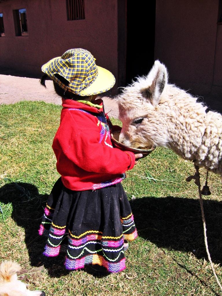 Little quechua girl and her alpaca, Raqch'i