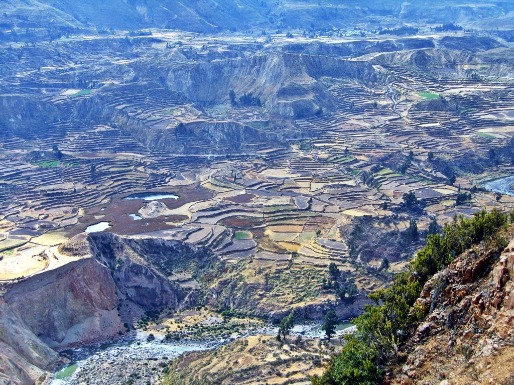Terraces of Colca Canyon