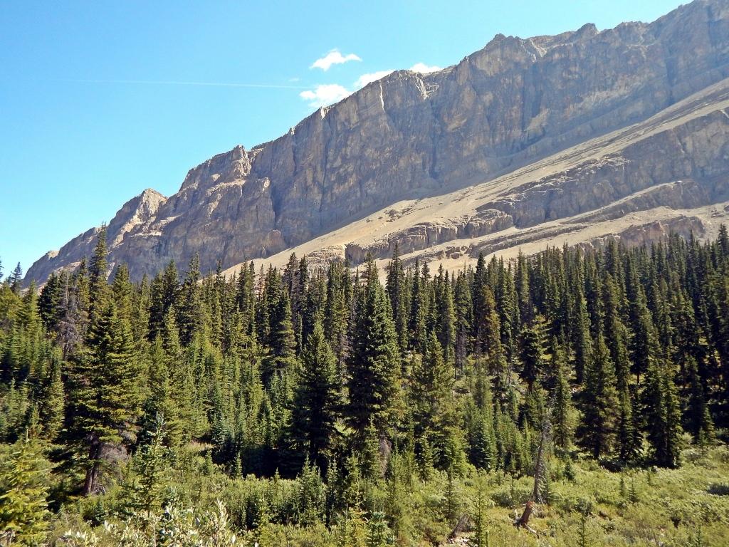 Near Four Point Campground, Jasper