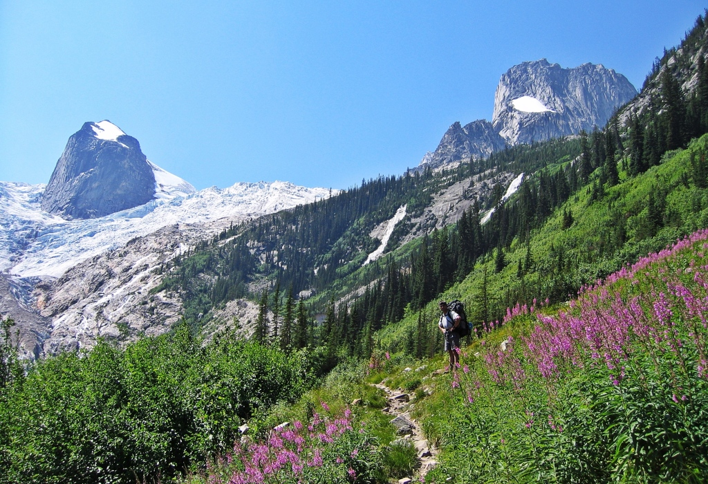 Wildflowers below Houndstooth, Bugaboos