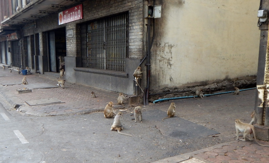 Macaques on the streets of Lopburi, Thailand