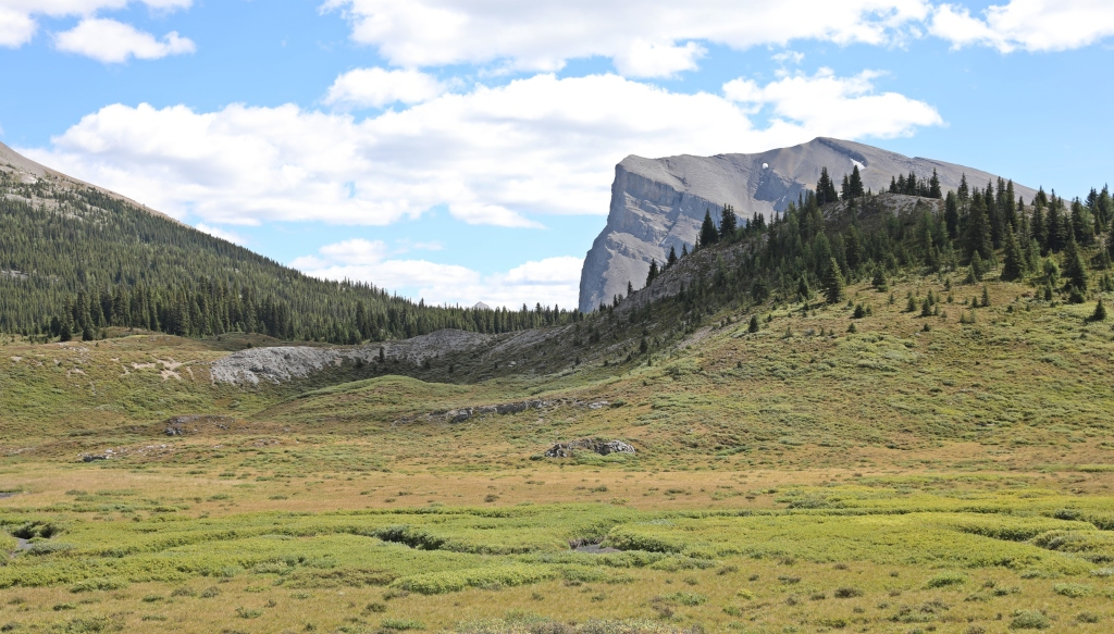 Looking toward Assiniboine Pass