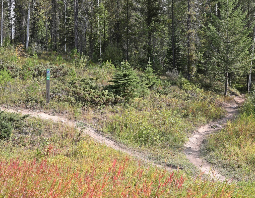 CBT Trail system, Golden, BC