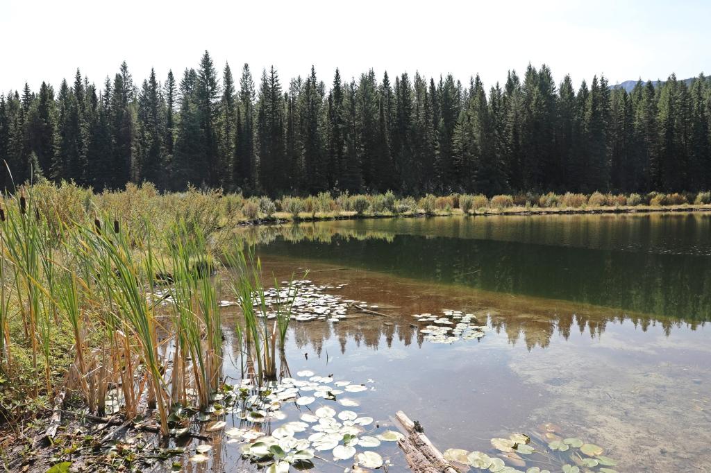 Cedar Lakes, Golden, BC