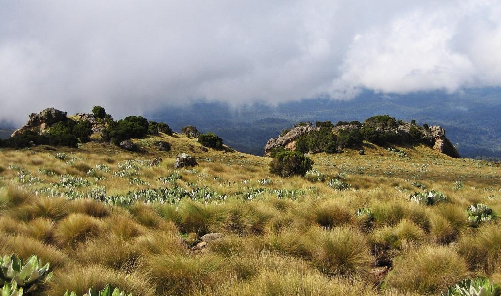 Vertical Bog, Mount Kenya
