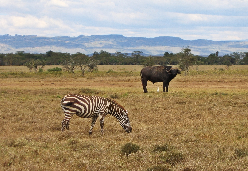 Maasai Maara National Reserve