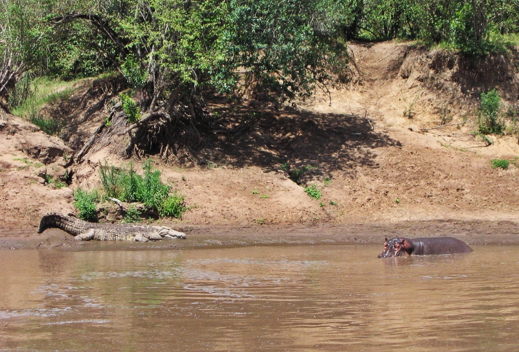 Hippo and crocodile, Mara River, Maasai Mara National Reserve