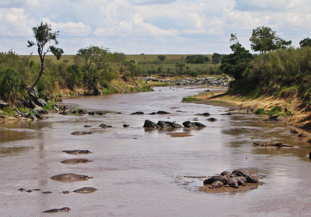 Hippos, Mara River, Masai Mara National Reserve