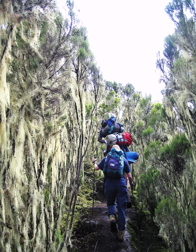 Old Man's Beard, Mount Kilimanjaro