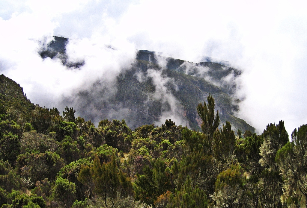 Misty moorlands, Mount Kilimanjaro