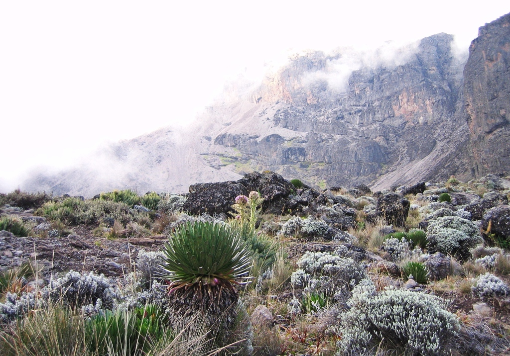 Interesting vegetation, Mount Kilimanjaro