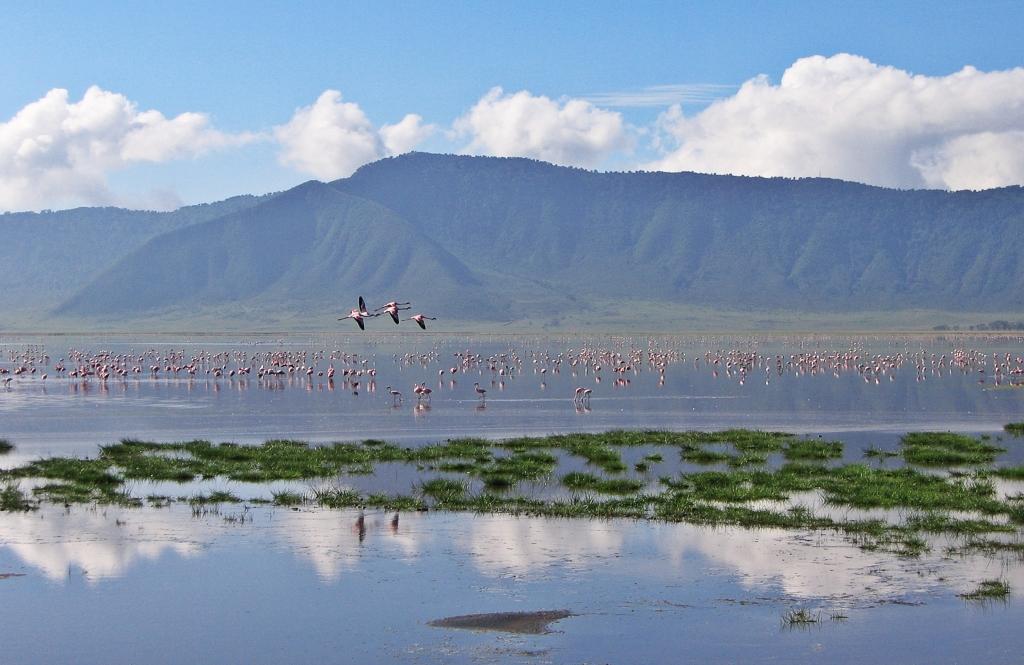 Flamingos, Lake Magadi, Ngorongoro Crater
