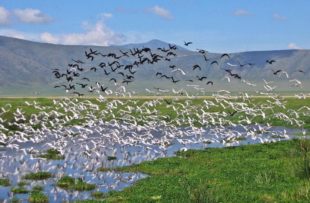 Birds, Serengeti National Park