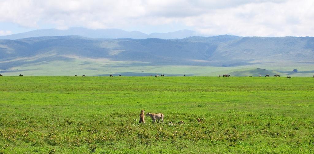 Cheetahs, Serengeti National Park