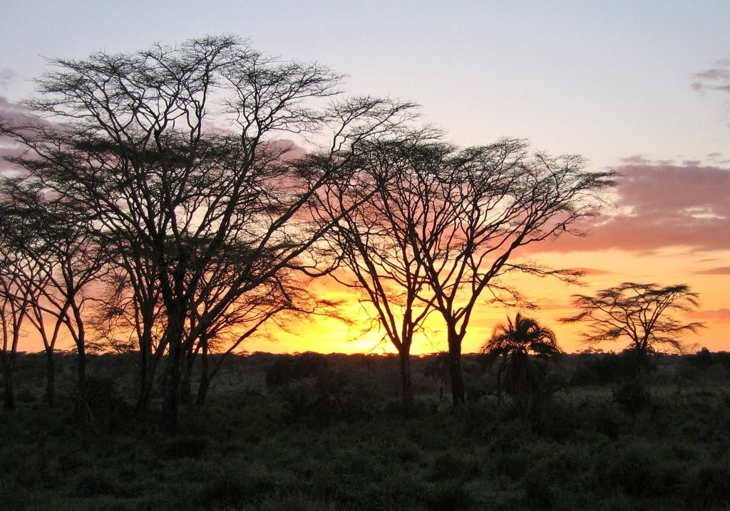 Sunset behind acacia trees, Serengeti National Park