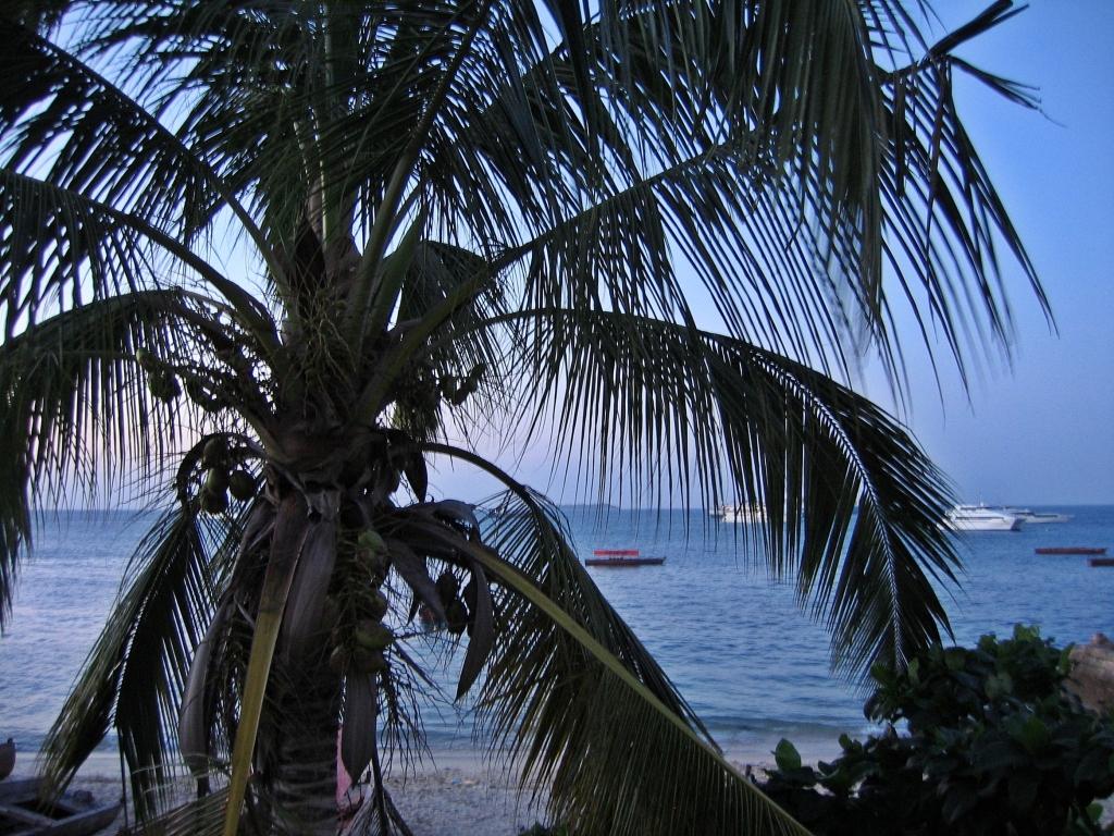 Coconut tree, Zanzibar