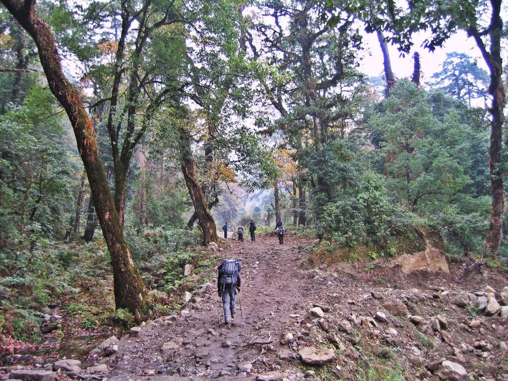 Walnut forest, Annapurna Circuit Trek