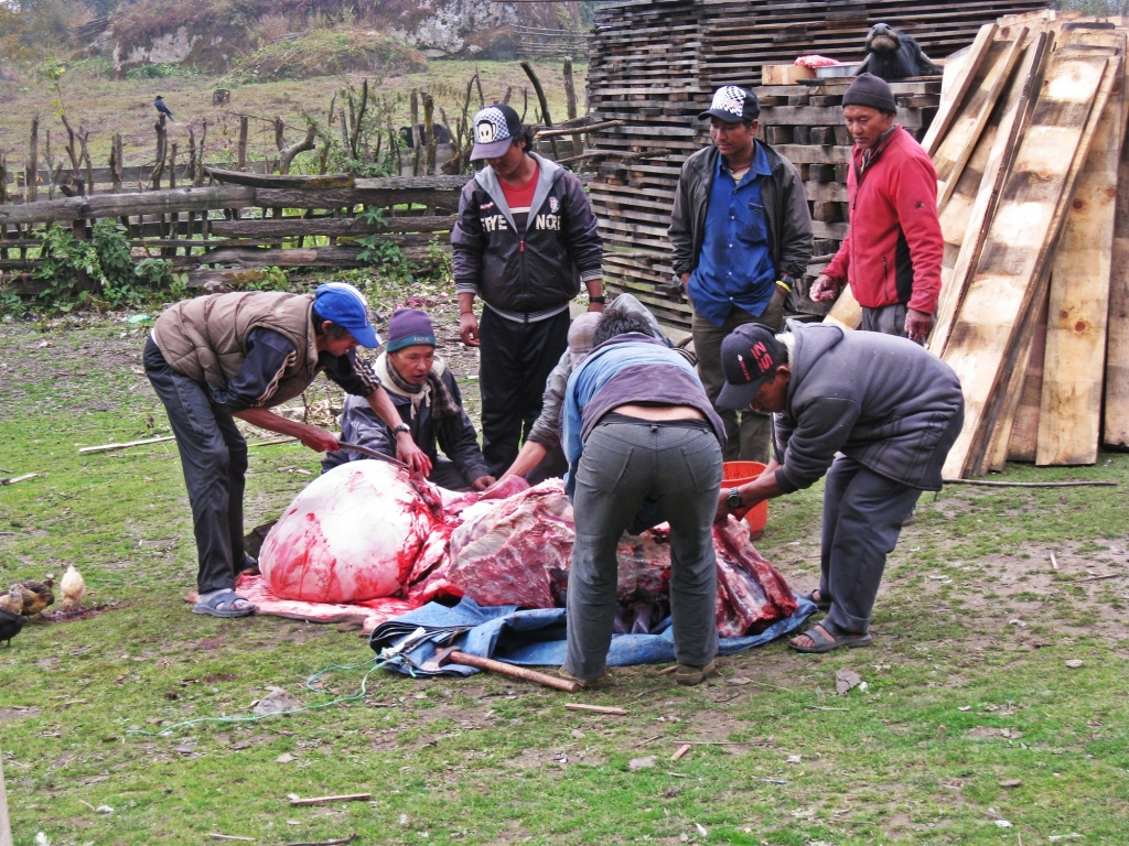 Butchering a buffalo in the yard, Annapurna Circuit Trek