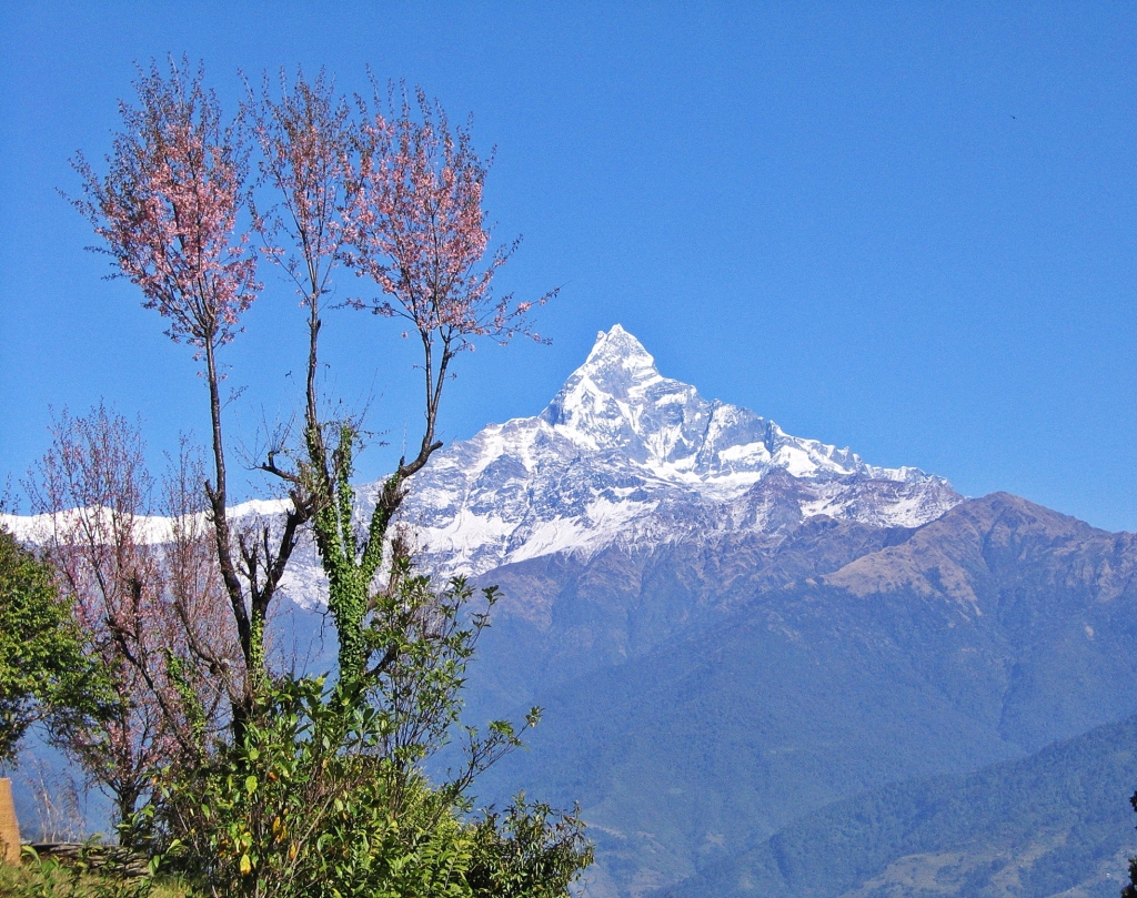 Machhapuchhare, from Dhampus