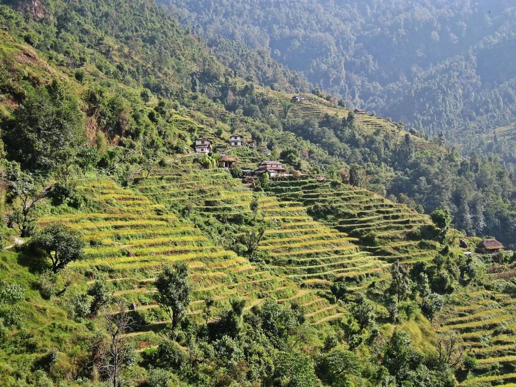 Terraces, Annapurna Sanctuary Trek