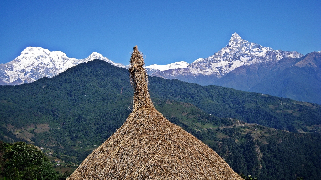 Dried rice stack, Machhapuchhare, above Dhampus