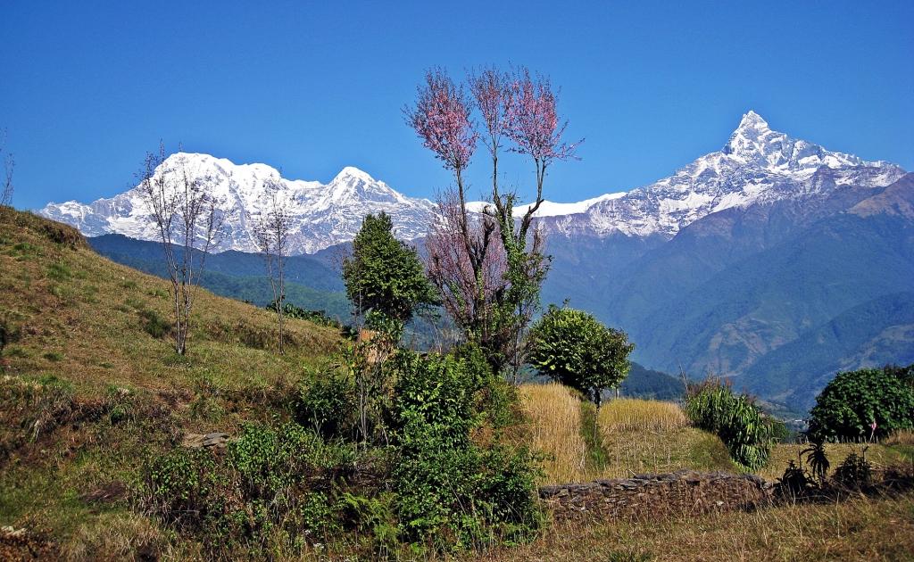 Machhapuchhare, above Dhampus